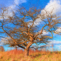 """""""Spring Tree Painting""""<br /> <br /> Beautiful golden tones in this twisted lone tree on golden grass, set against blue skies with puffy white clouds! A lovely digital oil painting!"""