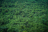 Primeval forest in Pu Luong national park, Hoa Binh Province, Vietnam, Southeast Asia