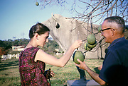Woman tourist being shown tree fruit, Fazenda Sant' Anna, Campinas, Brazil, South America 1962 possibly Psidium guineense  guava?