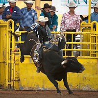 Justin Grander from Tuba City scores a 76 on the bull Bucket Head during the Navajo Nation Indian Rodeo in Window Rock Thursday.