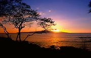 Kiawe tree, sunset, Ahihi-Kinau Marine Preserve, Maui, Hawaii, USA<br />