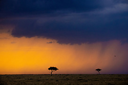 A Game of Tones in the Masai Mara.<br /> <br /> BIO: My name is Mwarv and I tell stories through photography and film. I help brands and organisations get their message across in ways that will not only keep their target audiences engaged, but also get them to respond as desired. I've been doing this for over 20 years now, first as an advertising creative, and now as a photographer and filmmaker, picking up a couple of awards along the way.<br /> <br /> WEBSITE: click.co.ke/new<br /> INSTAGRAM: @mwarv