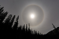 This halo formed around the sun while we were hiking the Nigel Pass trail near the Columbia Icefields on the Icefields Parkway in Banff National Park.<br /> <br /> ©2015, Sean Phillips<br /> http://www.RiverwoodPhotography.com
