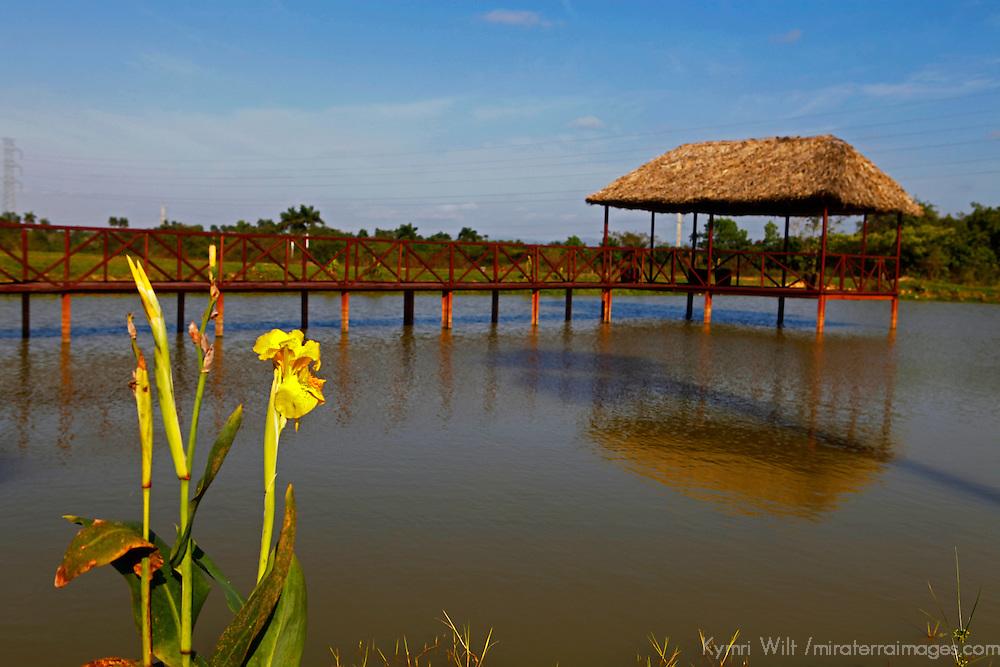 Central America, Cuba, Pinar del Rio. Rural pond with shaded dock.