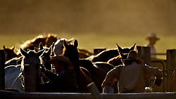 Wyoming Cowboys and horse herd