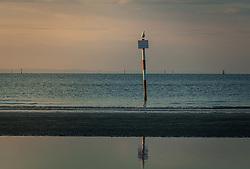 THEMENBILD - eine Möwe auf einem Hinweisschild am Strand, aufgenommen am 16. Juni 2018, Lignano Sabbiadoro, Österreich // a seagull on a sign on the beach on 2018/06/16, Lignano Sabbiadoro, Austria. EXPA Pictures © 2018, PhotoCredit: EXPA/ Stefanie Oberhauser