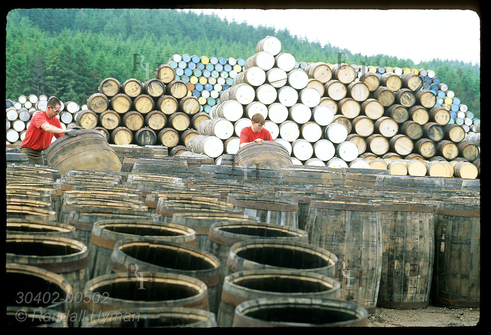 Coopers fetch used casks in yard @ Speyside Cooperage to repair for whisky industry; Dufftown. Scotland