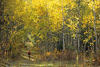A mountain biker rides through an aspen grove in Jackson Hole, Wyoming.