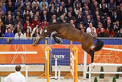 093 - Lucky Won van het Bevrydthof<br /> KWPN Stallion Selection - 's Hertogenbosch 2014<br /> © Dirk Caremans