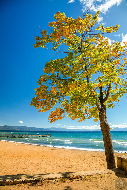 """""""Autumn Tree at Kings Beach 1"""" - Photograph of a tree with fall colored leaves along the shore of Kings Beach, Lake Tahoe."""