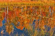 Autumn on ponf adjacent Lake Laurentian. Lake Laurentian Conservation Area.<br />Sudbury<br />Ontario<br />Canada
