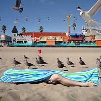 Verenigde Staten. Californie. Santa Cruz. 6 oktober 2007.<br /> Beach life  Santa Cruz.<br /> Meeuwenlokker op het strand van Santa Cruz.