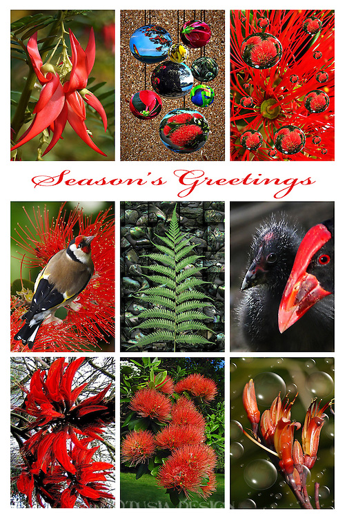 Christmas Greeting Cards Design New Zealand Nature Theme Season S Greetings Tusia Design