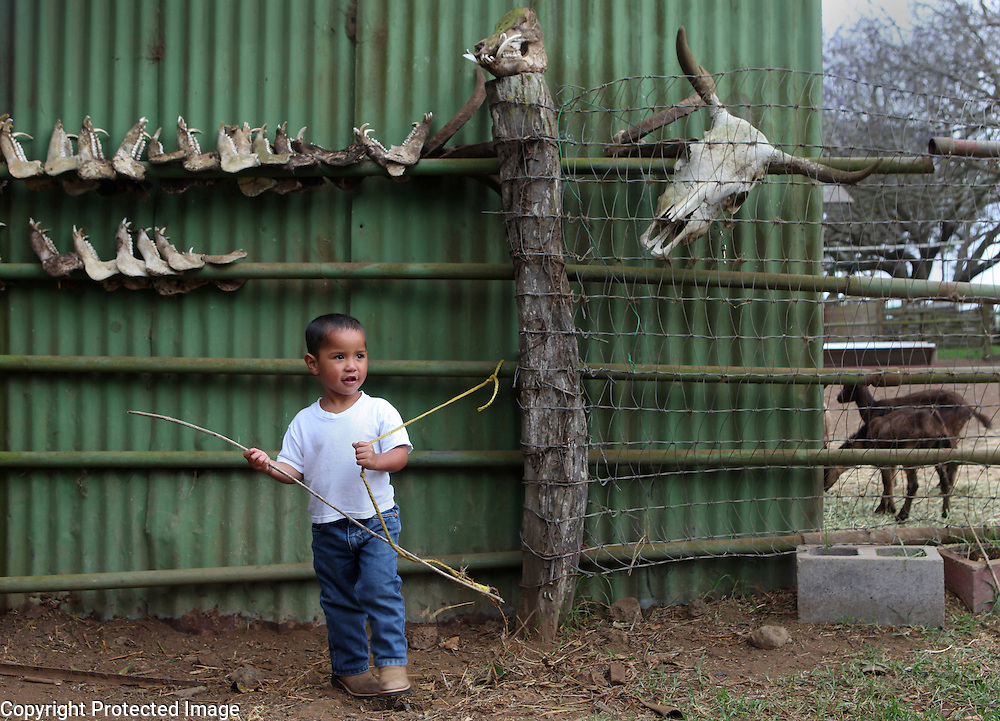 """Xanda Ho'opai, 4, the son of fourth generation cowboy, Jesse Ho'opai, plays with a stick and rope outside his home on Parker Ranch in Waimea, Hawaii. Behind him are the jawbones from wild pigs Xanda's father and cowboy friends have killed over the years.  Many of the cowboy families supplement their income by hunting and fishing.  """"Growing up, we survived off the pork,"""" says Shane Ho'opai, Jesse's brother.  """"When my dad worked for Parker Ranch, he didn't bring home that much,"""" he explains.  Xanda is growing up in the same cowboy house his father and uncle were raised in on Parker Ranch."""