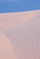 Patterns in dune, Monahans Sandhills State Park, Texas, USA.