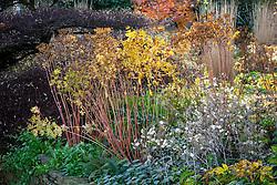 Seedheads in an autumn border at Pettifers. Euphorbia wallichii - Spurge -  and Lunaria annua - Honesty.