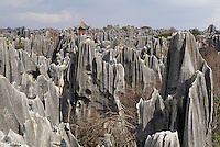 Chine. Yunnan. Foret de pierre de Shilin a Lunan. // Limestone pinnacles in Shilin, Stone Forest, at Lunan, Yunnan, China