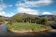 passion fruit plantation along Huancabamba river / PERU