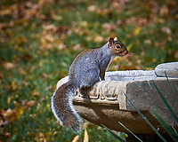 Squirrel on an Empty Fountain in my Backyard. Image taken with a Fuji X-T1 camera and 100-400 mm OIS lens (ISO 200, 400 mm, f/8, 1/80 sec).