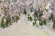 Pine trees growing in the rocks at the top of Sportsmans Slide in Keremeos, British Columbia, Canada