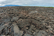Tourists walking on the volcanic landscape at Punta Moreno on Isabela island, Galapagos, Ecuador. The Cerro Azul volcano is in the background.