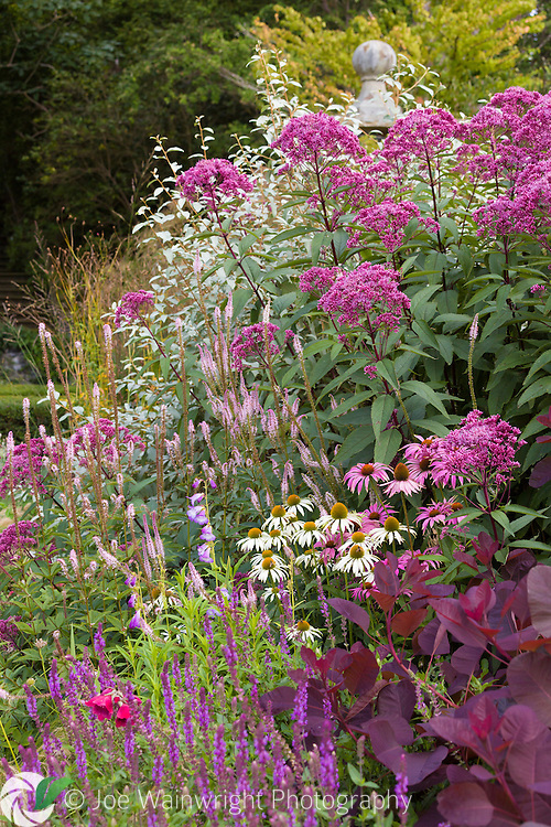 A late summer border at Bodnant Gardens, North Wales. This image is available for sale for editorial purposes, please contact me for more information.