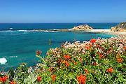 Coastal Landscape In Laguna Beach California
