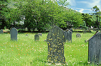 Country cemetery  with varied flora, Cumbria