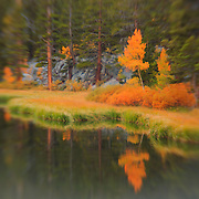 Weir Lake Fire Tree - Fall Color - Lensbaby