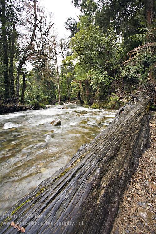 Racing Stream, Liffey Forest Reserve - Tasmania