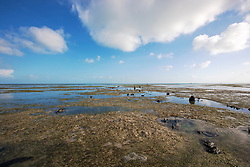Shallow pools in the mud flats at Broome's Town Beach on the shores of Roebuck Bay.  The inter-tidal mud flats are richly productive, covered in seagrass and supporting a myriad of marine life.