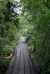 04 June 2015. Jean Lafitte National Historic Park, Louisiana.<br /> Raised walkway over the swamp at the Barataria Preserve wetlands south of New Orleans. <br /> Photo©; Charlie Varley/varleypix.com