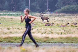 Licensed to London News Pictures. 08/10/2021. London, UK. A runner enjoys the mild temperatures of 15c, (8c warmer than usual) this morning in Richmond Park, south-west London as weather experts reveal that today could be the UK's warmest October morning on record. Temperatures are also predicted to rise this afternoon with highs of 21c expected. Photo credit: Alex Lentati/LNP