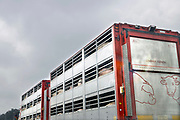 Nederland, A50 Veghel, 7-3-2017Veewagens met varkens op weg naar het slachthuis.The Netherlands. Pigs in a lorry, truck, on their way to the slaughterhouse.Foto: Flip Franssen