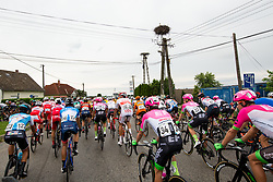 The cyclists during 1st Stage of 25th Tour de Slovenie 2018 cycling race between Lendava and Murska Sobota (159 km), on June 13, 2018 in  Slovenia. Photo by Vid Ponikvar / Sportida