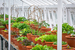 The winter salad leaf collection in a glasshouse at West Dean