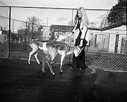 """Former Miss World Visits Dublin Zoo.<br /> 1973.<br /> 14.01.1973.<br /> 01.14.1973.<br /> 14th January 1973.<br /> Miss Eva Rueber-Staier, former Miss World from Austria and the """"World Wildlife Fund's Anniversary Girl"""", paid her first visit to Ireland to open the Shell/BP Irish Wildlife Promotion. As part of the promotion Eva paid a visit to Dublin Zoo in the Phoenix Park, Dublin.<br /> <br /> Image shows Miss Rueber-Staier in an enclosure with two blackbuck antelope."""
