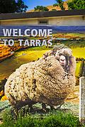 Shrek the Sheep sign at Tarras Store, Otago, South Island, New Zealand