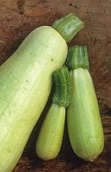 Courgette 'White Volunteer'. Zucchini