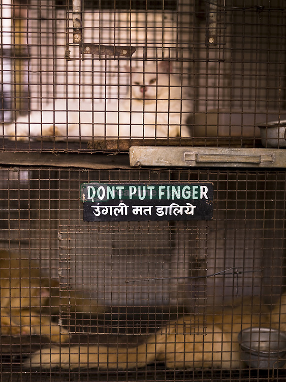 July 21, 2019 - Cat In Cage With Warning Sign (Credit Image: © Keith Levit/Design Pics via ZUMA Wire)