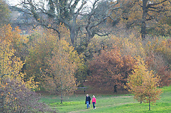 © Licensed to London News Pictures. 24/11/2020. <br /> Royal Tunbridge Wells, UK. Late autumn colours on the trees. People brave the cold autumnal weather at Dunorlan Park in Tunbridge Wells, Kent to get their daily coronavirus lockdown exercise. Photo credit:Grant Falvey/LNP