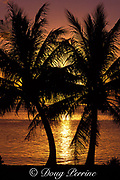 coconut palms at sunset, Guam, USA, Micronesia ( Western Pacific Ocean )