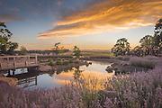 Sunset over Saffron Fields Vineyard's Japanese Garden overlooking the Willamtte Valley. Oregon