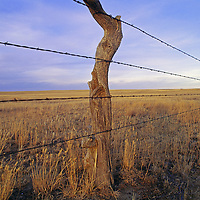 """A barbed wire fence stretches under Montana's famed """"big sky."""""""