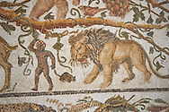 Detail of a Roman mosaics design depicting Silenus and Cupids showing a lion, from the House of Sienus, ancient Roman city of Thysdrus. 3rd century AD. El Djem Archaeological Museum, El Djem, Tunisia. .<br /> <br /> If you prefer to buy from our ALAMY PHOTO LIBRARY Collection visit : https://www.alamy.com/portfolio/paul-williams-funkystock/roman-mosaic.html . Type - El Djem - into the LOWER SEARCH WITHIN GALLERY box. Refine search by adding background colour, place, museum etc<br /> <br /> Visit our ROMAN MOSAIC PHOTO COLLECTIONS for more photos to download as wall art prints https://funkystock.photoshelter.com/gallery-collection/Roman-Mosaics-Art-Pictures-Images/C0000LcfNel7FpLI