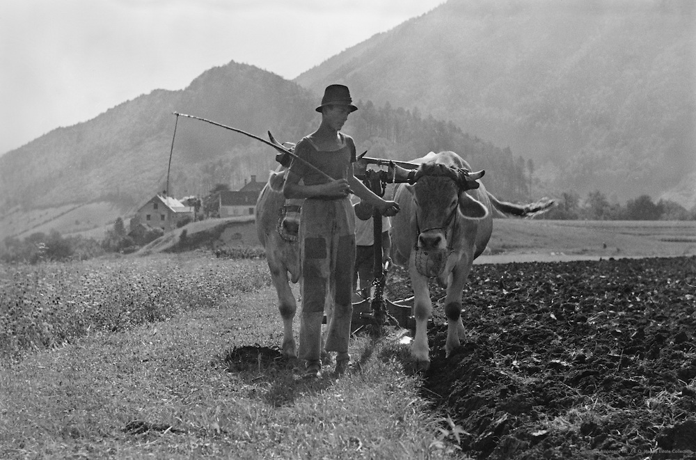 Farmer with Oxen Plow-Team, Molln, Austria, 1935
