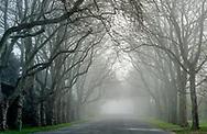 Trees in Fog, Street, East Hampton, NY