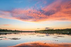 Sunset and wading birds, Lemon Lake, Great Trinity Forest near Trinity River, Dallas, Texas, USA.