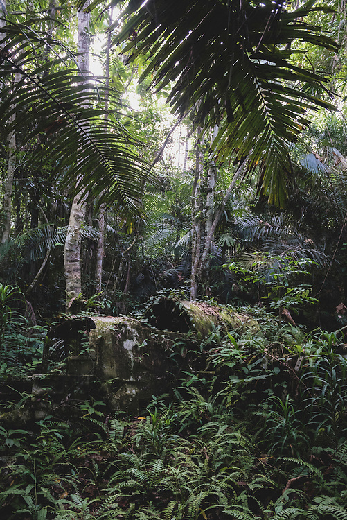 An Allied WWII aircraft sits abandoned in jungle on what was once a military airstrip used by American and Australian militaries in the war against Japan. The Allies captured the airfield, called Tadji Airfield, from the Japanese in April 1944.<br /> <br /> (July 19, 2017)