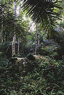 An Allied WWII aircraft sits abandoned in jungle on what was once a military airstrip used by American and Australian militaries in the war against Japan. (July 19, 2017)